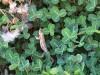 droga_na-mount_kenya_2012-23